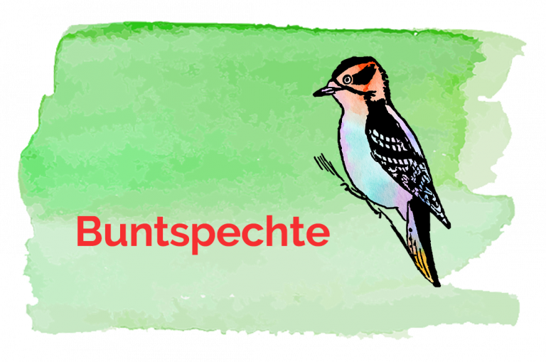 Grossansicht in neuem Fenster: Logo Buntspechtgruppe